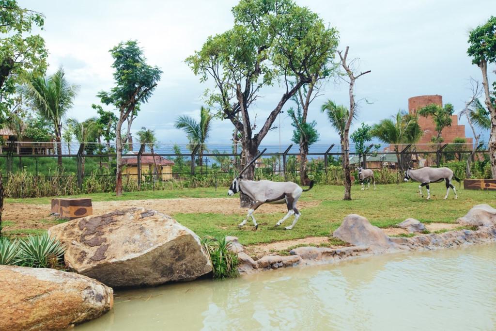 Hơn 42.000 động vật hoang dã được bảo tồn ở công viên trên sông